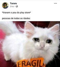 Facebook, Memes, Meme