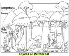 photograph regarding Layers of the Rainforest Printable referred to as 21 Easiest Tropical Rainforest Pets / Jungle Pets pics
