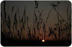 łąka. meadow