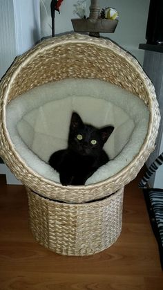 """* * KITTEH: It be foolproof. A secret society wif-in a secret society. Noes more questions on dat pleez."""""""