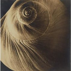 EDWARD STEICHEN - The Spiral Shell, 1921
