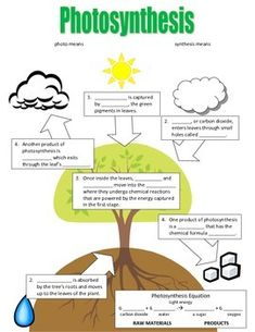 Photosynthesis Flowchart by MichMas Plant Science, Science Biology, Science Lessons, Teaching Science, Ap Biology, Physical Science, Earth Science, Science Penguin, Life Science