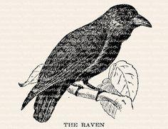 Raven Illustration - Vintage Bird Clip Art Image – Raven Digital Stamp - Printable Transfer Graphic – instant download clipart - CU OK