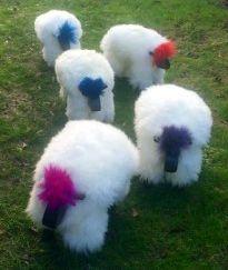 Punky Sheep.jpg