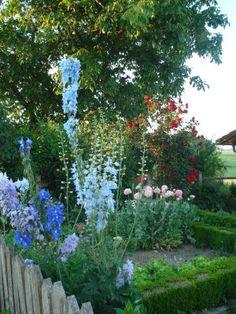 Bauerngarten mit Rittersporn