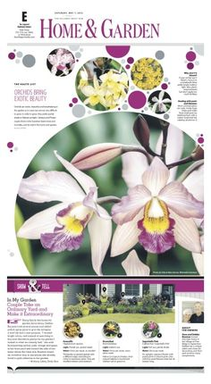 Orchids bring exotic beauty