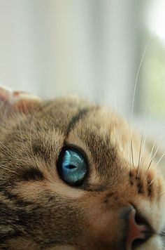 Blue eyes! Is that possible?