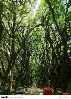 Ağaçlar ve Çiçekler ile Büyüleyici bir Hale Gelen En Romantik 15 Sokak
