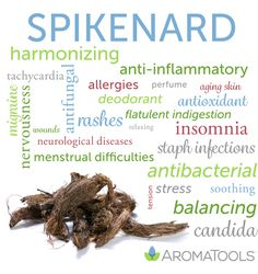 ", Essential Oil Spotlight: Spikenard , Spikenard essential oil (Nardostachys jatamansi) gets its name from the spike-shaped rhizomes (or ""spikes"") of the plant that the oil is distilled fro. Spikenard Essential Oil, Essential Oils For Skin, Essential Oil Uses, Oil Benefits, Doterra Essential Oils, Spikes, Body Care, Herbalism, Essential Oils"