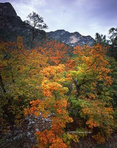 Mckittrick Canyon | Mckittrick Canyon fall color;  part of Guadalupe Mountains National Park in West Texas.
