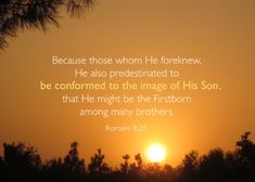 Image result for romans 8:29 quotes