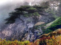 """The tree which moves some to tears of joy is, in the eyes of others, only a green thing that stands in the way."" I loved this magical-looking tree at Point Lobos, partially obscured by the fog, roots woven into the cliffside above the ocean. . . #williamblakequote #pointlobos #tree #monterey #bigsur #hikingadventures #roots #treesofinstagram #treelover #cliff #fog #mist #foggy #treestagram #trees #beautifulplaces #naturephotography #landscapephotography #californiadreaming #montereybay…"