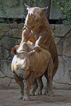 動物園放浪記の画像|エキサイトブログ (blog)