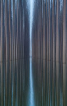 Amazing Landscapes Featuring Rows of Symmetrical Trees - by Oliver Delgado- My Modern Metropolis