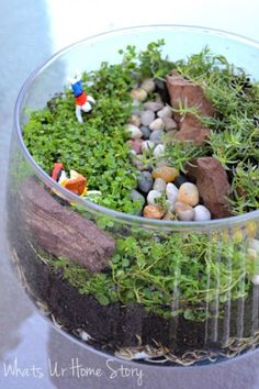How to make an open terrarium with Air dry clay figurines, Corsican mint, and Orange scented Thyme www.whatsuhomestory.com