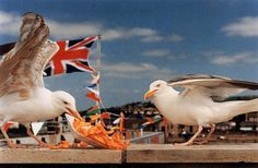 """typical british seaside""- british flag, seagulls, chips"