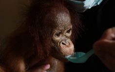 <p>A forest fire in Indonesia may seem like a far away issue, but for the past ten years, our investigations have exposed how the everyday products in our cupboards and on our bathroom shelves have direct links to the destruction of Indonesia's rainforests.</p>