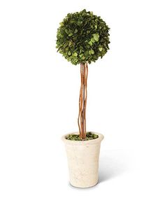 Take a look at this 21.5'' Boxwood Potted Topiary today!