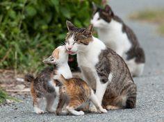 nice Amazing Island Fukuoka in Japan is called the Cat Heaven I Love Cats, Cute Cats, Funny Cats, Funny Animals, Cute Animals, Cat Heaven, Mama Cat, Curious Cat, Cat Behavior