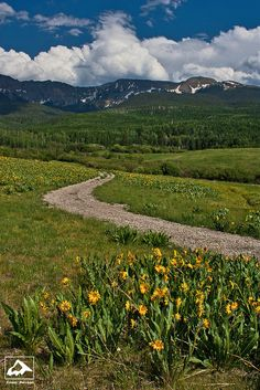 Flowers and the San Juan Mountains - Colorado by isaac.borrego, via Flickr