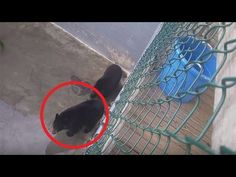 Bears Don't Belong in Concrete Pits! Help Animals Suffering in U.S. Roadside Attraction | One Green Planet