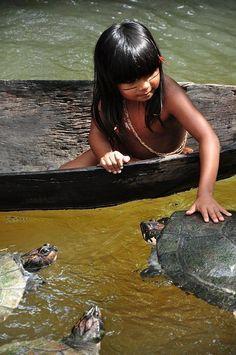 Tartarugas da Amazônia, o Brasil - por Divulgação / Jornal AC