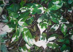 Impatiens - soft pastels X Botanical Illustration, Illustration Art, Soft Pastels, Plant Leaves, Drawings, Plants, Sketches, Plant, Drawing