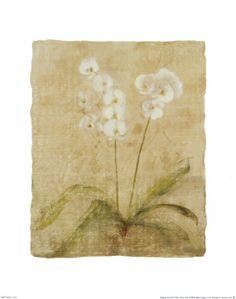 Orchid Print by Cheri Blum