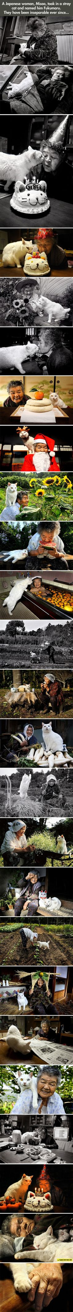 Japanese Woman And Her Kitty(I believe animals have the souls of those who left before us...the devotion this cat has for this woman could be a departed loved one has come back to be with her - km)