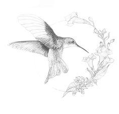 #hummingbird tattoo sketch