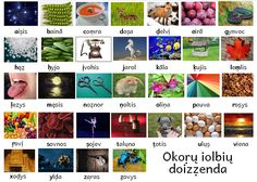 A poster illustrating the Ochrien alphabet. There are thirty-three letters, but only thirty-two photographs because ṃ is not found in word initial position. The way the letters are pronounced in Kuolųs are as follows, but there is a lot of regional...