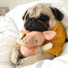 """Determine even more details on """"pugs"""". Check out our web site. Determine even more details on """"pugs"""". Check out our web site. Cute Pugs, Cute Dogs And Puppies, Cute Funny Animals, Cute Baby Animals, Animals And Pets, Doggies, Black Pug Puppies, Safari Animals, Animals Images"""