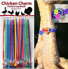 Chicken Charm ™ Poultry Leg Bands ~Fits Chickens,Geese,Ducks in Business & Industrial, Agriculture & Forestry, Livestock Supplies | eBay