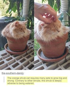 Funny cute cats kitty animal pictures 46 Ideas for 2019 Funny Animal Memes, Cute Funny Animals, Funny Animal Pictures, Cute Baby Animals, Cat Memes, Funny Cute, Animals And Pets, Funny Humor, Funny Pics