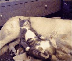 Gato echando la siesta                                                                                                                                                                                 Más