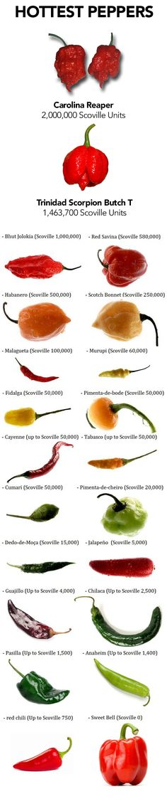 Hot Pepper Seeds – get the famously hot Carolina Reaper seeds, Trinidad Scorpion Butch T seeds, Bhut seeds and lots more hot pepper seeds at: www.sandiaseed.com/collections/hottest-pepper-seeds