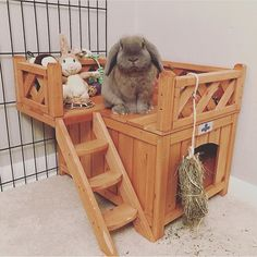 The Best Selling Wooden Fort for Pet Bunnies & Rabbits is at Bunny Supply Co! Featuring an adorable Bunny Cages, Rabbit Cages, House Rabbit, Rabbit Toys, Pet Rabbit, Indoor Rabbit House, Indoor Rabbit Cage, Rabbit Pen, Rabbit Hutch Indoor