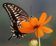 Krabbel - Vlinders: 7 #kleurinspiratie