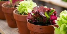 trucchi orto giardino - fonte foto: homeklondike.com