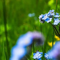 blue flowers by George Serbu Blue Flower Photos, Blue Flowers, Display Advertising, Print Advertising, Retail Merchandising, Us Images, Your Image, Wall Art Prints, Stock Photos