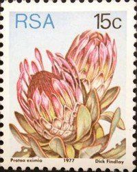 Issued of May R S A Protea eximia. African Safari, African Art, Protea Art, Africa Tattoos, South Afrika, National Symbols, Flower Stamp, Mason Jar Crafts, Fauna
