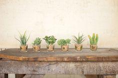 Succulent Desktop Plant in Pot