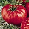 source for heirloom tomato seeds