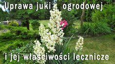 Jak uprawiać jukę ogrodową aby co roku obficie i pięknie zakwitała-film Pergola Patio, Backyard, Stock Tank Pool, Juki, Shrubs, Gardening Tips, Flower Power, Peonies, Color Schemes