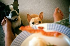 You bite her big toe and when she drops the plate I'll push it under the chair then we can eat!