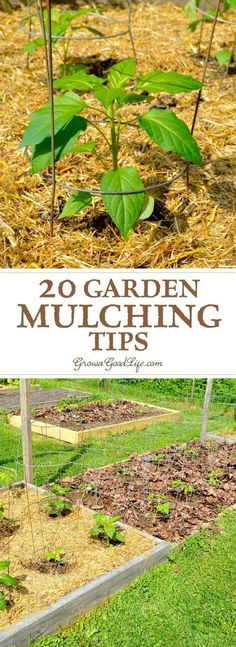 Mulching is one of the best things you can do for your garden. A generous layer of mulch over the soil surface will suppress weeds, retain moisture, and provide and soil enrichment as it decomposes. Source by artsyannietx Mulch For Vegetable Garden, Garden Pests, Best Mulch For Garden, Potager Garden, Veggie Gardens, Garden Bed, Easy Garden, Garden Landscaping, Permaculture