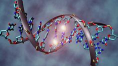Epigenome Maps Uncover New Detail Into Human Organs