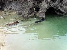 Razas de perros: Perro de agua español - Paperblog
