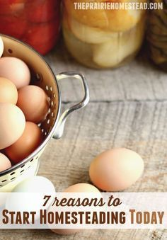 So you're pondering this whole homestead thing for 2017? Should you take the plunge now, or wait? 7 reasons to start homesteading NOW!