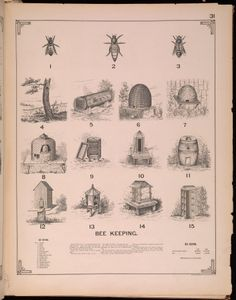 from The Growth of Industrial Art, 1892 edition | bee keeping